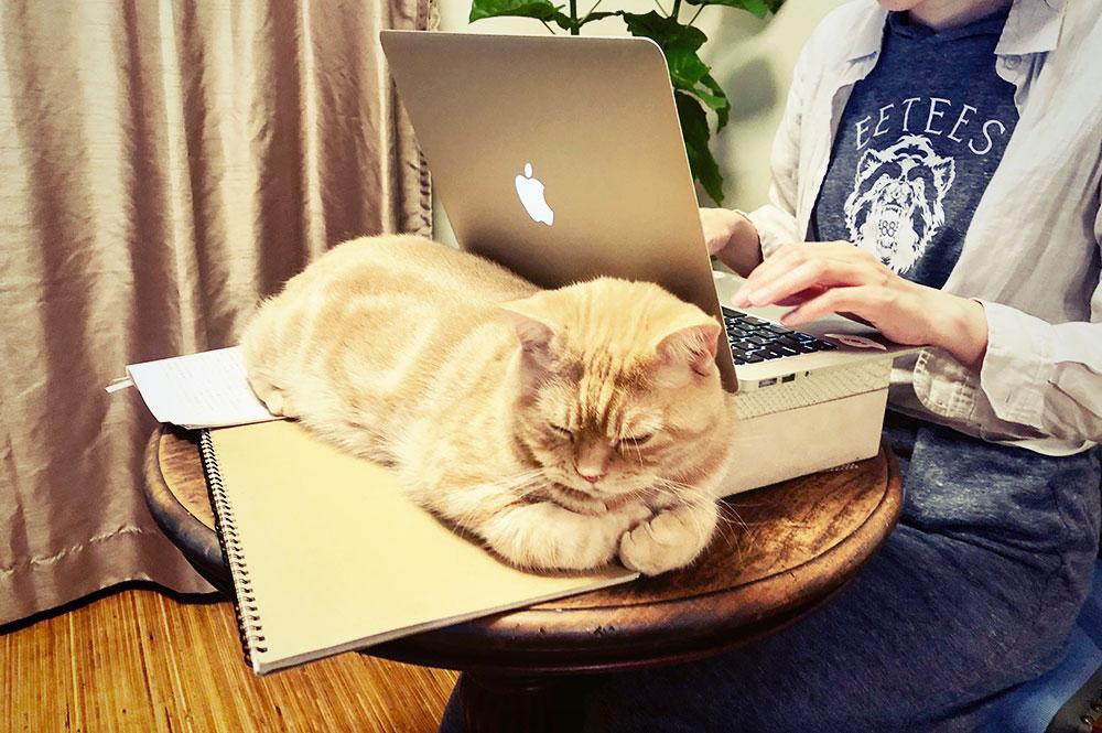 柳澤さんの愛猫、たびちゃん。めちゃめちゃ可愛い。ちなみにアキッパの石川さんとは猫仲間だそう。